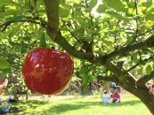 Picnic at Anne Hathaway's Cottage