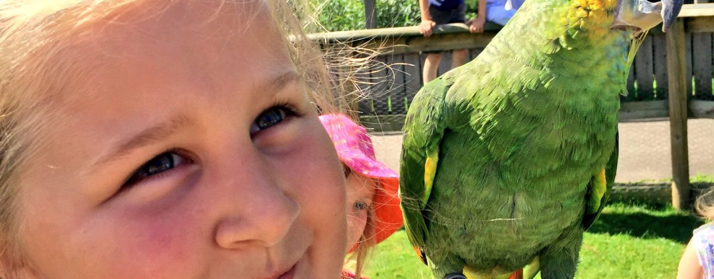 Summertime Fun at Birdland