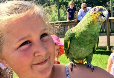 Summertime Fun at Birdland
